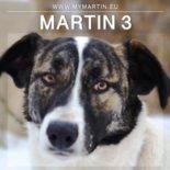 Martin 3