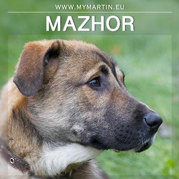 Mazhor