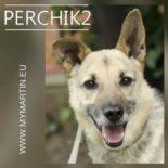 Perchik 2
