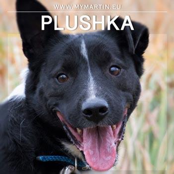 Plushka