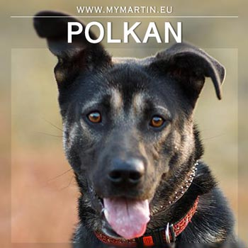 Polkan