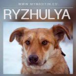 Ryzhulya