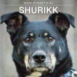 Shurikk