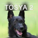 Tosya 2