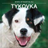 Tykovka