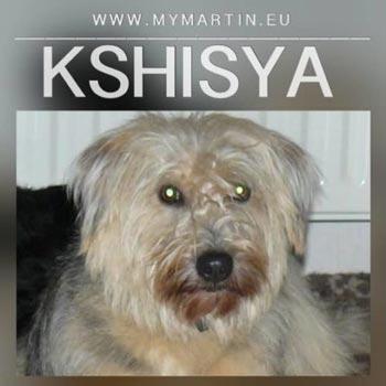 Kshisya