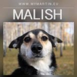Malish