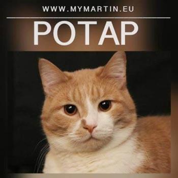 Potap