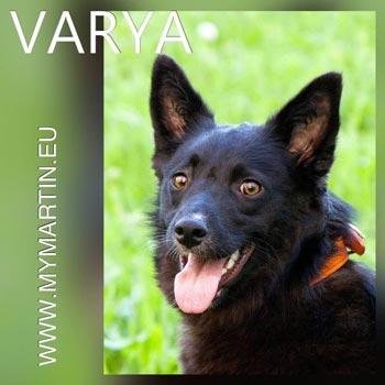 Varya
